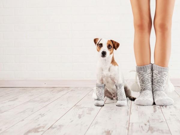 Hund-und-Frauchen-mit-Socken