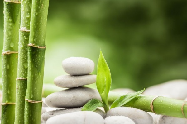 Bambus-Grundstoff-f-r-Viskose